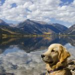Man's best friend at Twin Lakes